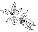 0000_layer-67